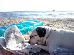 dog_read_news_on_the_beach