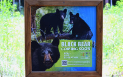 BLACK BEAR, BLACK BEAR, WHAT DO YOU SEE?
