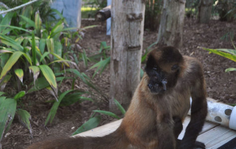 ZOOS ARE DETRIMENTAL FOR ANIMALS' HEALTH AND HAPPINESS