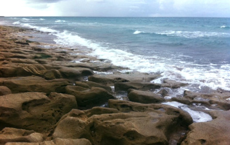 FLORIDA OFFERS ROCKY SHORES