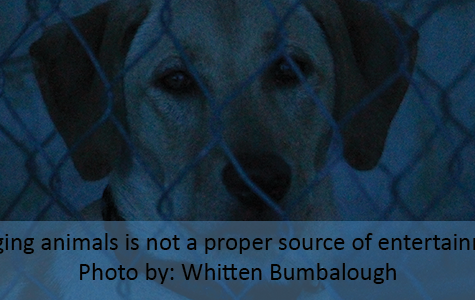 ANIMAL CAPTIVITY HAS SAME EFFECT AS ABUSE
