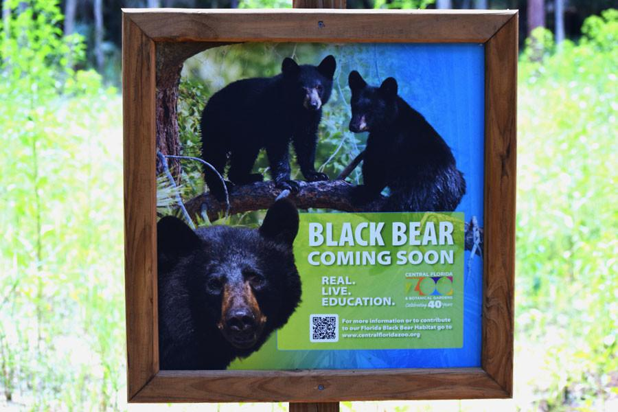 The Sanford Zoo is soon welcoming black bears to their exhibits.