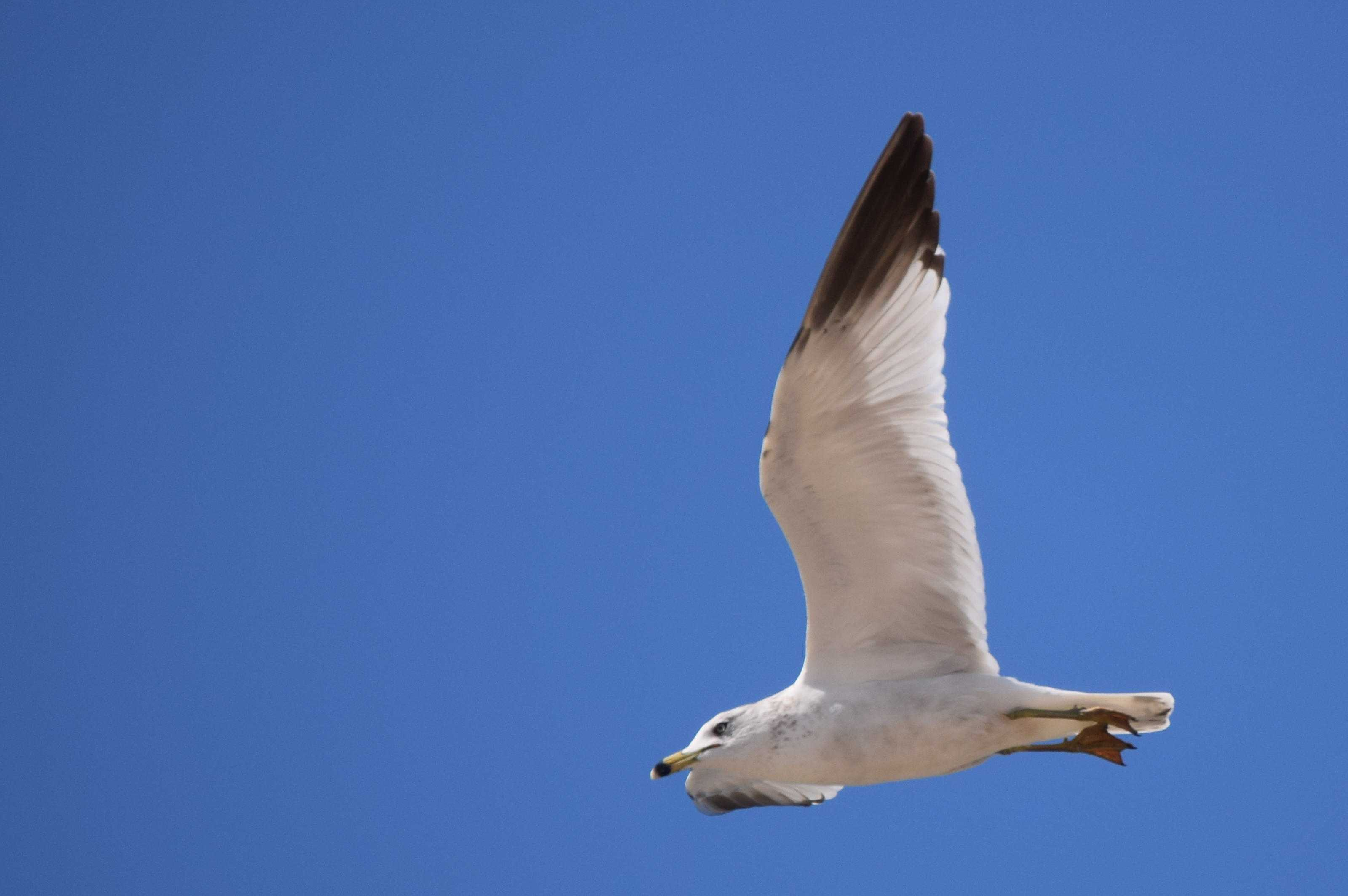 Seagulls, among other birds, hold a growing presence on Seminole's campus.