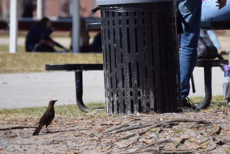 Birds often wander close to students, looking for a bite to eat.