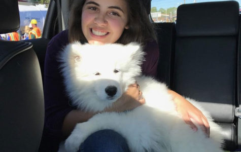 CHEWY THE SAMOYED CHARMS SEMINOLE