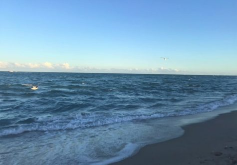 The Environmental Club is making efforts to keep the beach clean.