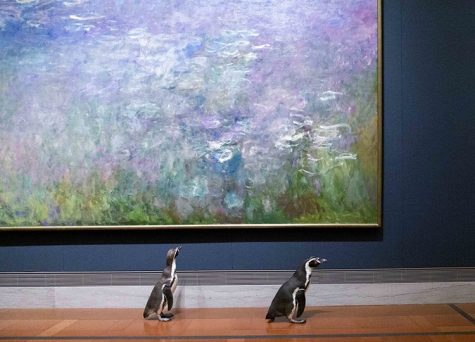 In Missouri, penguins from the Kansas City Zoo were allowed to roar the halls of a local museum. Although there are different opinions on whether they should have gone or not, the penguins seemed to enjoy the outing.  Source- My Modern Met
