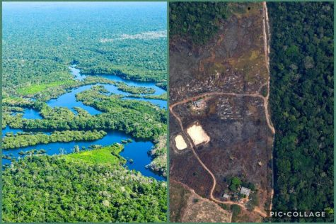 The before and after pictures of the Amazon Rainforest make it evident that humans must quickly decide on a course of action in order to protect the environment from further damage. The world is running out of time and we must hurry before the damages become irreversible.
