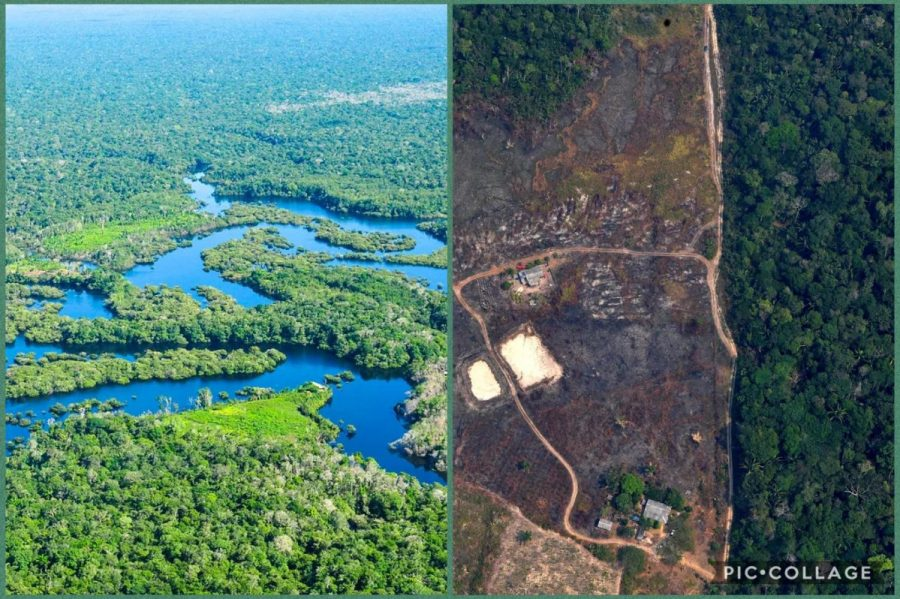 The+before+and+after+pictures+of+the+Amazon+Rainforest+make+it+evident+that+humans+must+quickly+decide+on+a+course+of+action+in+order+to+protect+the+environment+from+further+damage.+The+world+is+running+out+of+time+and+we+must+hurry+before+the+damages+become+irreversible.+%0A